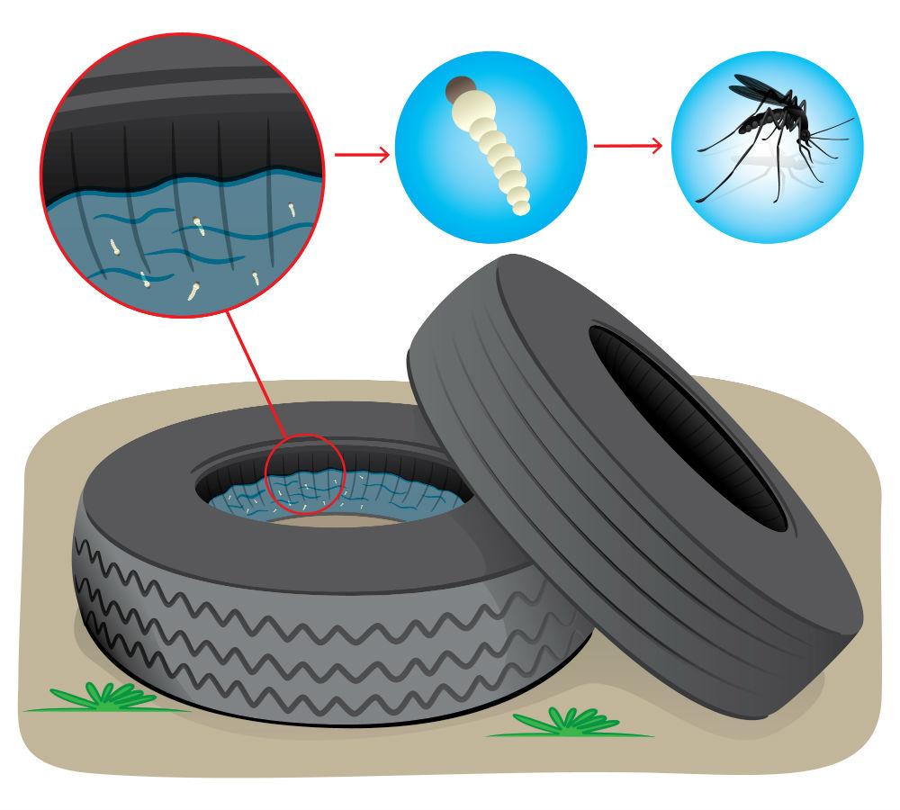 Neumáticos y Zika