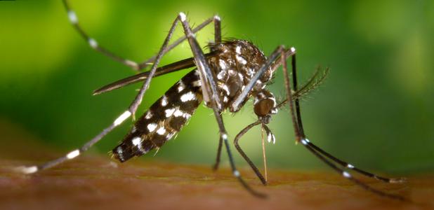 Reciclar neumáticos previene las plagas de mosquitos