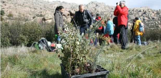 La asociación reforesta realiza actividades de plantación