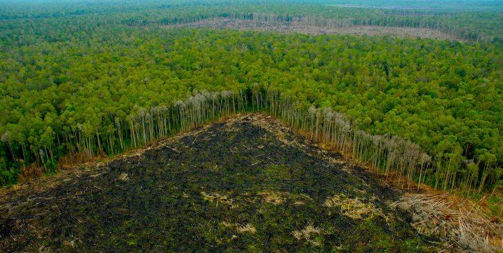 Deforestación del Amazonia
