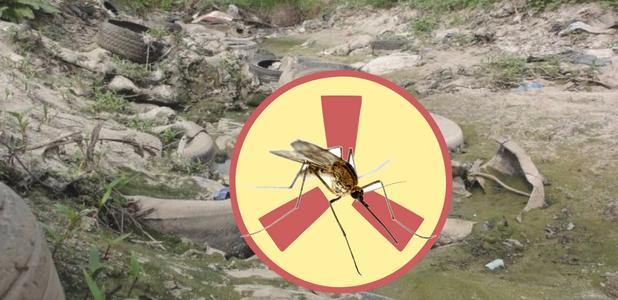 Reciclando neumáticos evitas la proliferación de mosquitos