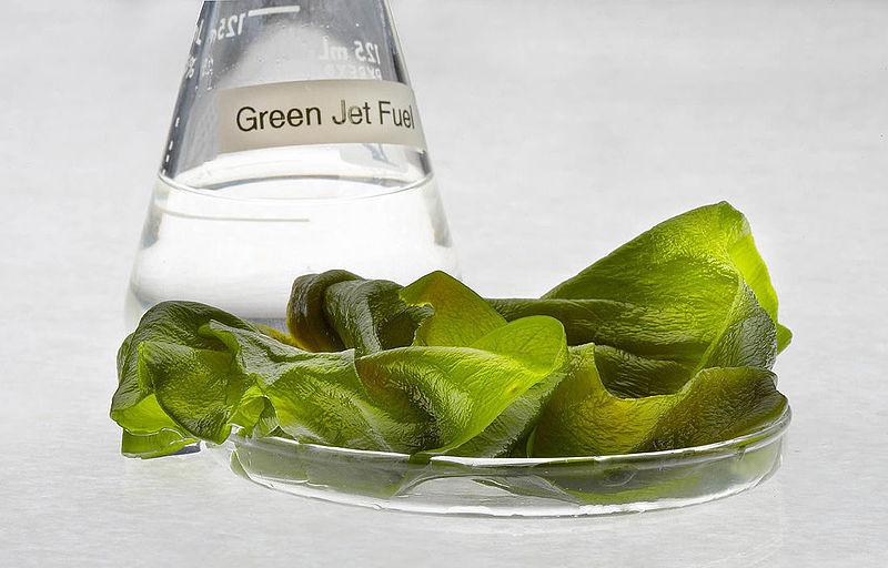 Las algas podrían ser un elemento más de tu coche