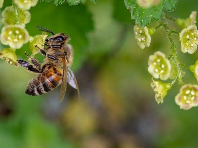 Por qué es importante la biodiversidad, de verdad