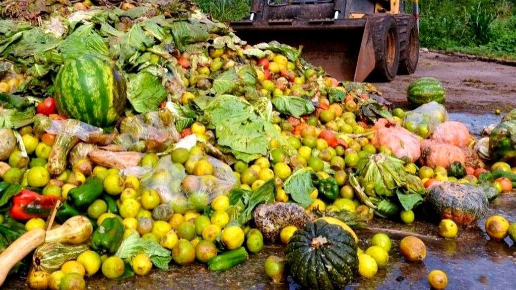 Tiramos 1.300 millones de toneladas de comida
