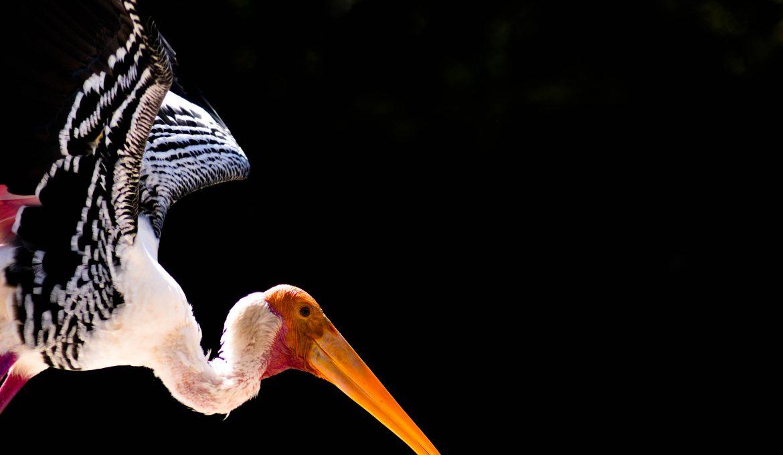 Los ODS a vista de pájaro