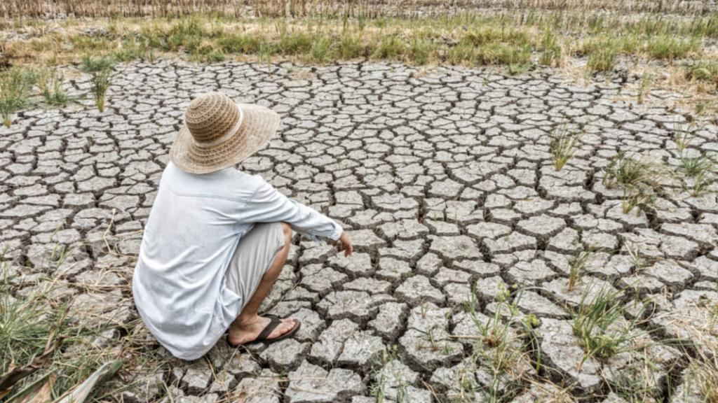 Día de la desertificación 2020: cuando la tierra nos pide ayuda