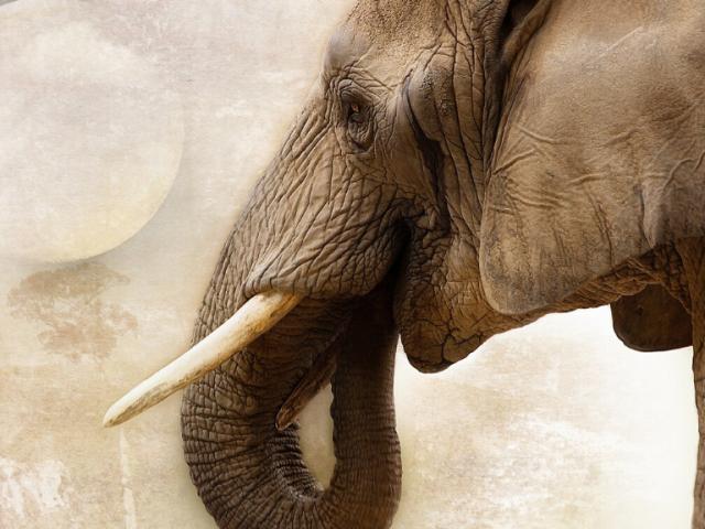 Combatir el tráfico de especies, una vacuna contra las pandemias