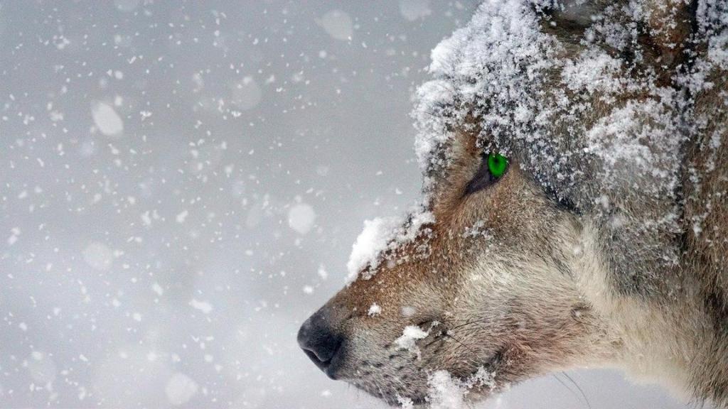 """Animales con """"mala prensa"""" que son vitales en los ecosistemas"""