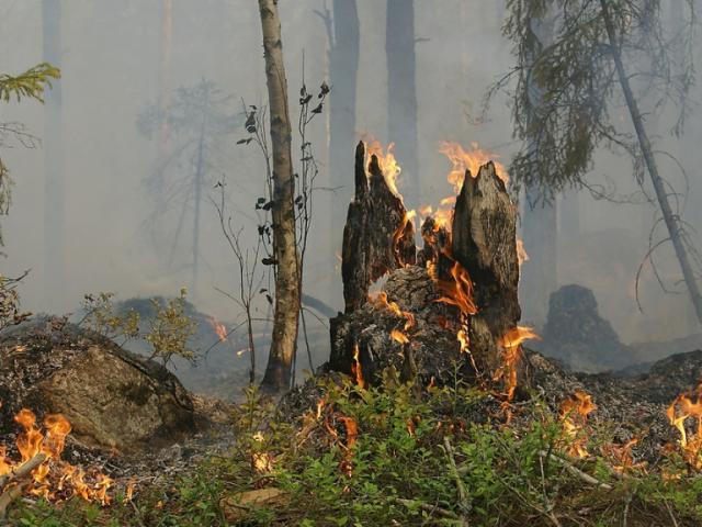 Combatir incendios forestales: ¿Cómo nos ayuda la tecnología?