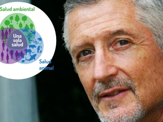 """Fernando Valladares, científico:  """"Lo que le va bien al medio ambiente nos va bien a nosotros"""""""