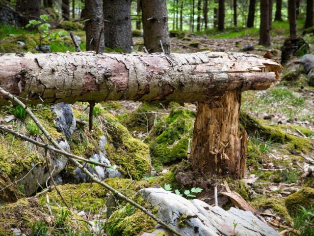 Cinco acciones para recuperar árboles tras Filomena