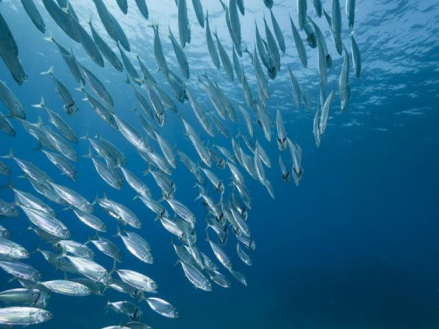 Mares para Siempre, la semana de la pesca sostenible para la buena salud de los océanos
