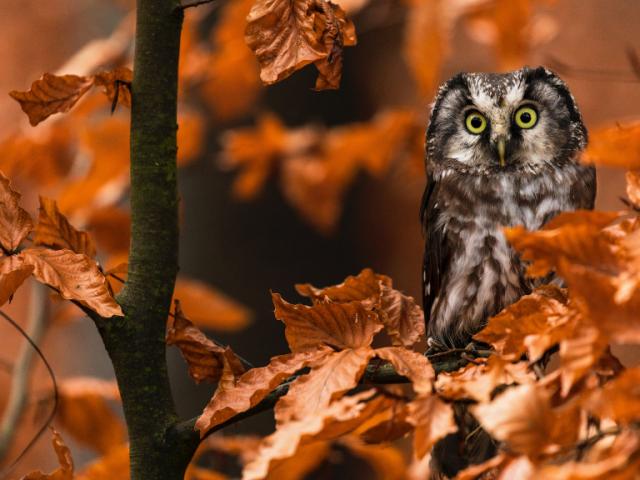 Salvar la biodiversidad. Ahora o nunca