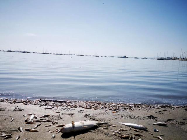 Claves para entender el desastre ecológico del Mar Menor